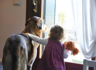 benefici convivenza animali