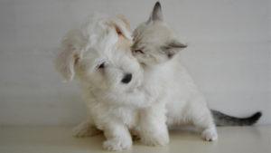 Protezione per i gatti bianchi dal sole – Fonte: Change.org