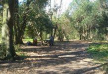bosco di palo