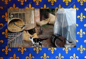 Pandina e Gigia fra le ceste del marcato – Foto: Colonia Felina del Castello Santa Severa