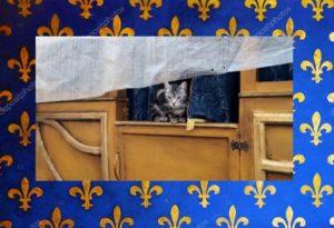 Svitol si affaccia dalla carrozza – Foto: Colonia Felina del Castello Santa Severa