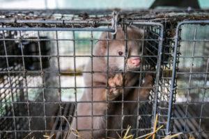 No alle pellicce – Fonte: LAV
