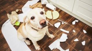 La responsabilità dei danni provati dal pet – Fonte: UNC