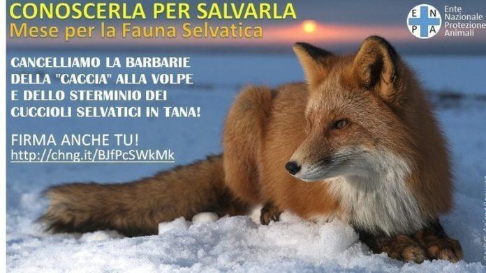 La petizione contro la caccia alla volpe (orizzontale) – Fonte: ENPA