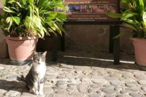 Benvenuti al Castello – Fonte: ENPA Santa Marinella