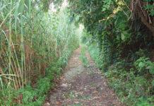Valle del Manganello