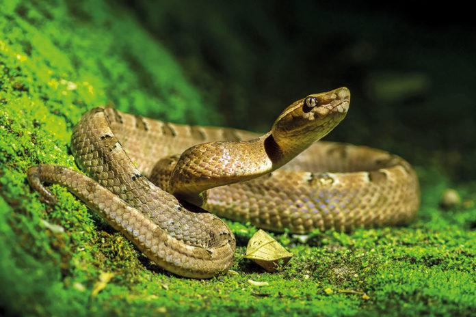 la grotta delle serpi
