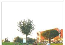 marcia degli alberi