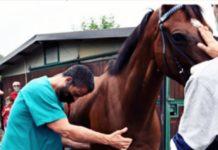 cavalli rubati