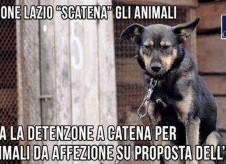 catene